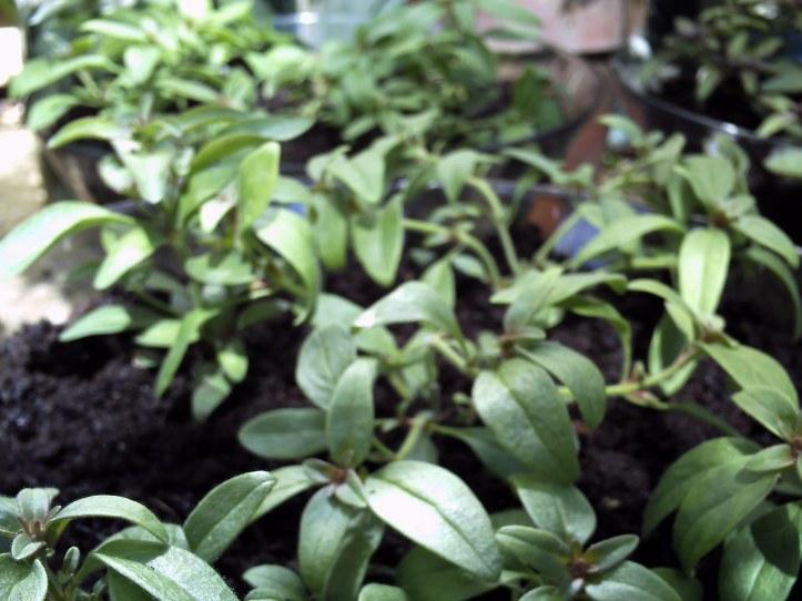 Planted wedding centerpieces